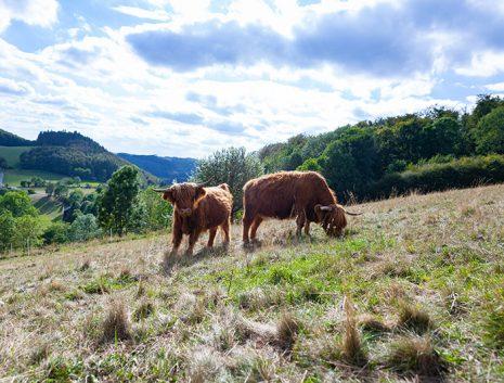 Home of Nature Highland Rinder