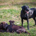 Bedürfnisse des Hundes: Wieso Du sie unbedingt respektieren solltest