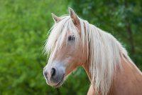 Home of Nature Pferd